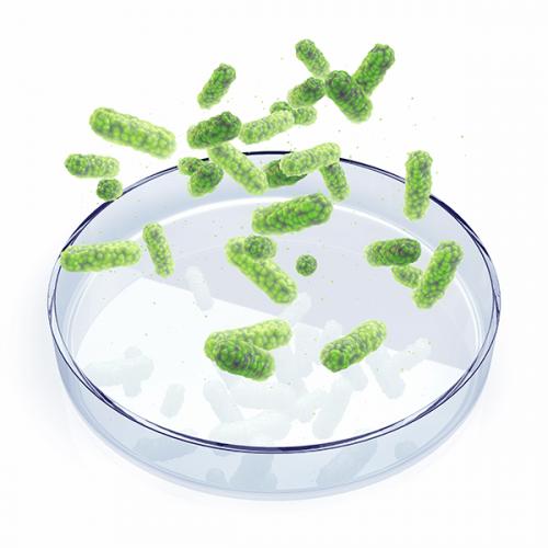 Bacteriologia Ambulatorial e Hospitalar