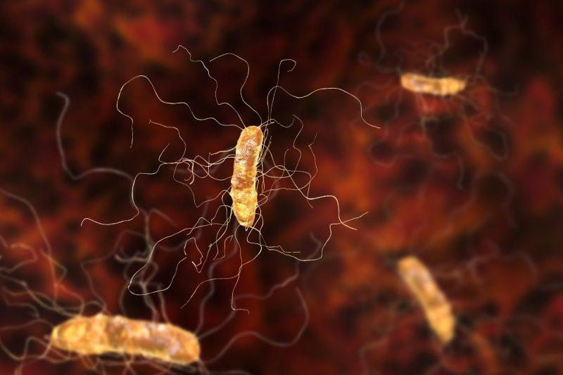 Bactéria Clostridium difficile