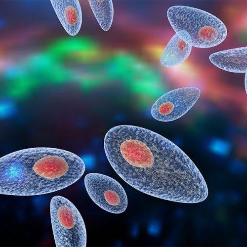 Imunologia Toxoplasmose