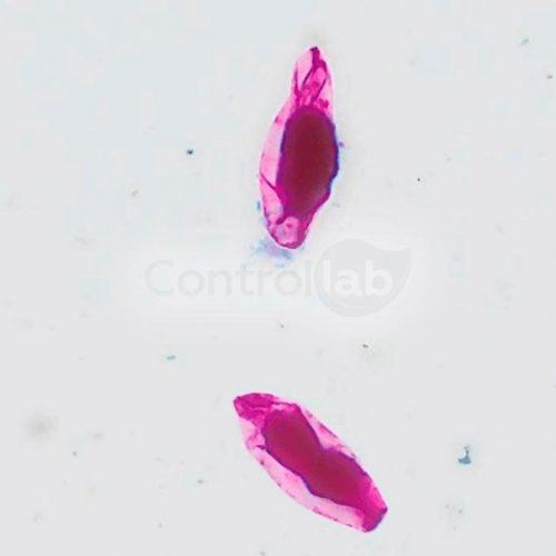 Parasitologia 2